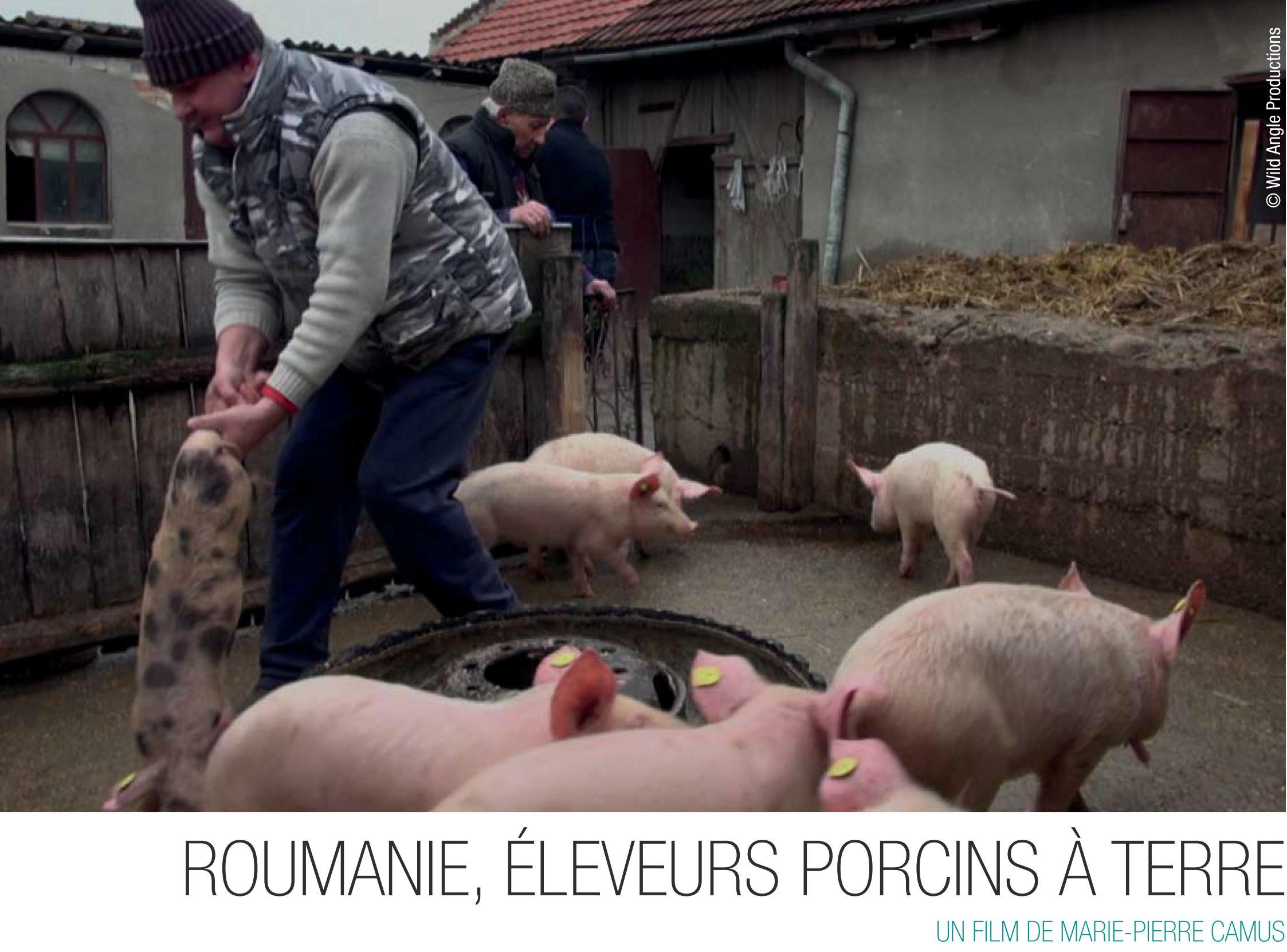 Roumanie, éleveurs porcins à terre Film projeté le 26 novembre au centre Ethic étapes le Cart, dans le cadre du festival AlimenTerre
