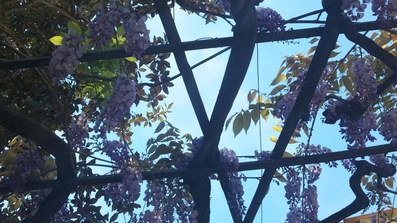 Le printemps nous va bien !